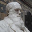 Darwin Got It Wrong (Destructions 6)